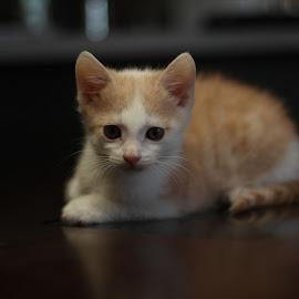 by Bjay Aysel - Animals - Cats Kittens