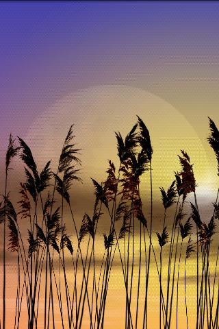 Reeds Free Live Wallpaper