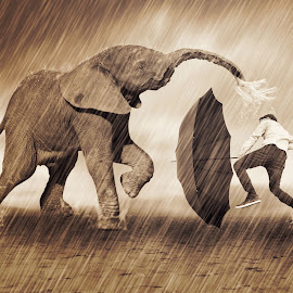 BERKELAHI DENGAN GAJAH by Ilham Abdi - Digital Art Animals ( #people #elephant #thing #manipulation #sureal )