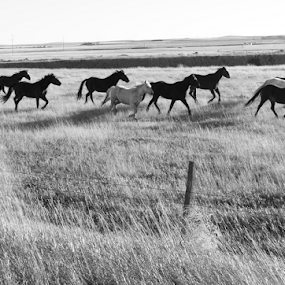 The Herd by Brian Robinson - Black & White Landscapes