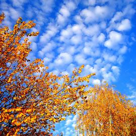 by Gordana Cajner - Nature Up Close Trees & Bushes ( blue, orange. color )