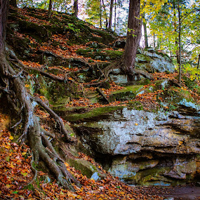 Ledges of a tree by Christine Weaver-Cimala - Nature Up Close Rock & Stone ( canon, hill, park, roots, moss, rock, leaves, maple, ledge, nature, oak, fall, trees )