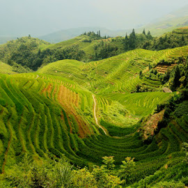 The green green of paddy field by Muhasrul Zubir - Landscapes Travel
