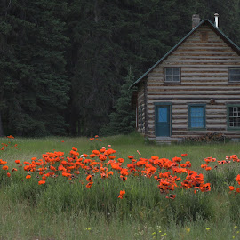 Polebridge Cabin by Cristin Poloni - Novices Only Landscapes ( orange, cabin, polebridge montana, montana, forest, flowers, woods, glacier national park )