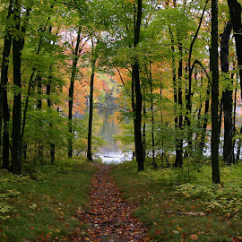 To the Lake by Scott Block - Landscapes Forests ( minnesota, paths, fall colors, nature, forest, trails,  )