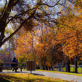 Waiting for You... by Sagarika Roy - City,  Street & Park  City Parks ( park, fall, path, treee,  )