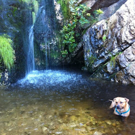 Franki enjoying the outing to my favourite place! by Mariette Chapman - Animals - Dogs Playing