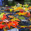by Vernon Mata - Nature Up Close Leaves & Grasses ( fall leaves, nature, colorful, color, fall,  )