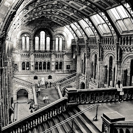 Natural History Museum by Gabriel Tocu - Buildings & Architecture Other Interior ( interior, building, museum, historical, architecture, public )
