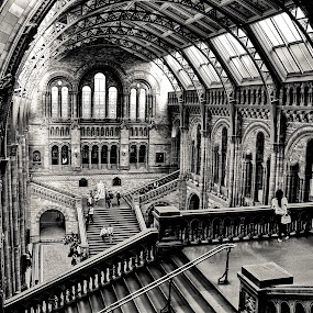 Natural History Museum by Gabriel Tocu - Buildings & Architecture Other Interior ( interior, building, museum, historical, architecture, public,  )