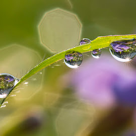 Ungu - Violet by Citra Hernadi - Nature Up Close Natural Waterdrops