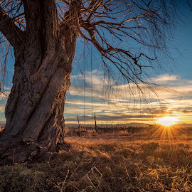 Sunset by Mike Vought - Landscapes Sunsets & Sunrises ( tree, utah, sunset, swing )