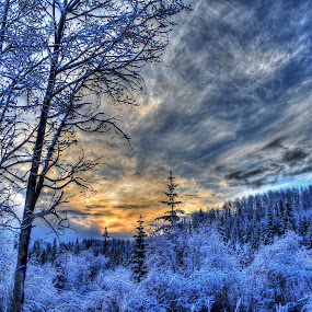 Ranch Sunrise by Skye Ryan-Evans - Landscapes Sunsets & Sunrises ( snowfall, frost, winter sunrise, daybreak, cold weather, winter scene, dawn, blue and gold, scenic photography, sunset, ice, snow, sunrise,  )