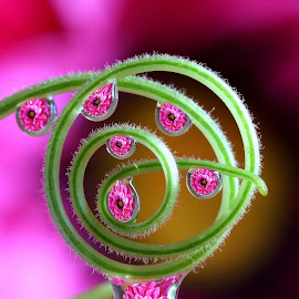 by Wahyudi Barasila - Nature Up Close Natural Waterdrops (  )