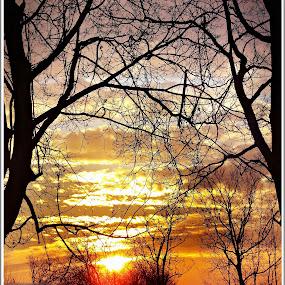 Naplemente a fák között  by Zlatko Sarcevic - Landscapes Sunsets & Sunrises ( clouds, color, sunset, trees, táj,  )