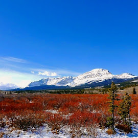 Canada colors by Tyrell Heaton - Landscapes Prairies, Meadows & Fields
