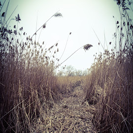 Walk In The Prairie by Tim Murphy - Landscapes Prairies, Meadows & Fields ( crushed, path, nikon, prairie, d5100, fields )