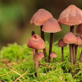 The Colony II by Nico Carbajales - Nature Up Close Mushrooms & Fungi