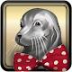 Circus Seal Timmy
