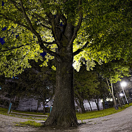 Lonely tree by Zvonimir Mihaljek - City,  Street & Park  Neighborhoods