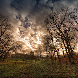 The Forest by Bouras Panagiotis - Landscapes Forests ( clouds, sky, colors, greece, trees, forest )