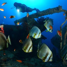 SS Thistlegorm part.3 by Damir Zurub - Landscapes Underwater ( ss thistlegorm, red sea, wreck, diving )