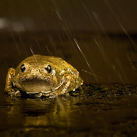 Rainy by Adi Parmana - Animals Amphibians (  )