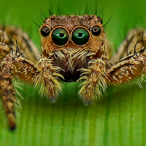 Look at me by Dave Lerio - Animals Insects & Spiders (  )