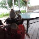 Duck barnacle