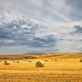 Harvest by Gary Davenport - Landscapes Prairies, Meadows & Fields ( clouds, wheat, palouse, bales, harvest )