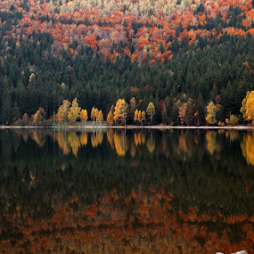 Twin worlds by Daniel Guta - Novices Only Landscapes ( reflection, autumn, colors, trees, lake, saint ana lake )