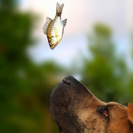 Lucky by Hollie Walden - Animals - Dogs Playing ( colorful, fish, fun, dog, photography )
