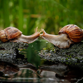 kissing snails by Alonk's Roby - Animals Other (  )