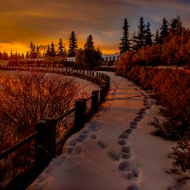 Walking In The Park  by Joseph Law - City,  Street & Park  City Parks ( footprints, millwood, winter, bushes, snow, morning glory, trees, walking paths, edmonton, city park, shadows )
