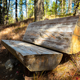Trailside Rest by Jesse Peterson - City,  Street & Park  City Parks ( bench, logs, montana, garnet, trail, scouts, trees, forest, hike, public, furniture, object )