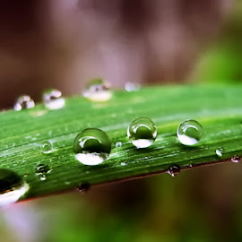 Droplets by Sengkiu Pasaribu - Nature Up Close Natural Waterdrops