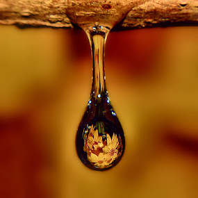 by Liz Crono - Abstract Water Drops & Splashes ( waterdrop )