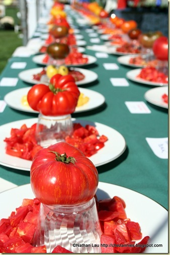 Tomato Tasting Table