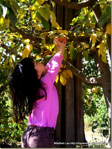 Esther picking an apple at Gizdich Ranch