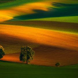 Three musketeers by Pawel Uchorczak - Landscapes Prairies, Meadows & Fields ( hills, moravia, czech, best, light, fields )