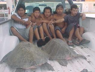 Captura la PM a cinco depredadores de tortugas marinas en Coyuca de Benítez y los remite a la PGR