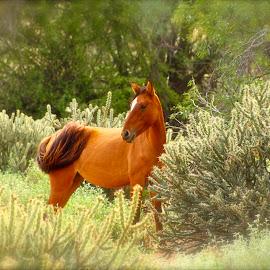 Wild Horse  by Catalina Caballero - Animals Horses