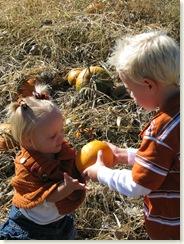 pumpkin 016