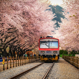 by Aaron Choi - Transportation Trains ( station, railroad, track, cherry blossom, spring )