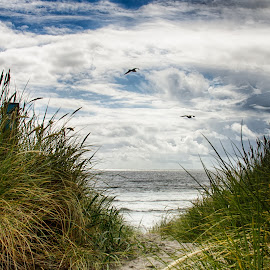 To the Beach by Jayme Spoolstra - Landscapes Waterscapes ( or )