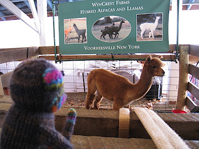 Seymour alpaca