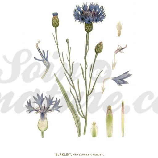 Acheter graviola corossol selva natural paris chez for Plante amincissante