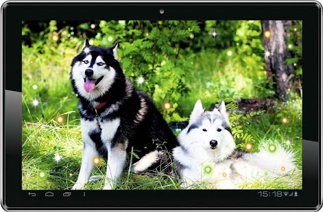Husky Dogs live wallpaper - screenshot