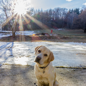 Gastone in the sun by Giovanni De Bellis - Animals - Dogs Portraits ( tree, snow, gastone, dog, sun, #GARYFONGPETS, #SHOWUSYOURPETS )