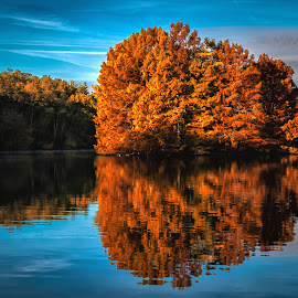 Autumn Reflections by James Kirk - Landscapes Forests ( autumn, trees, lake, reflecting )